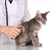Ветеринарные клиники в Зеленодольске